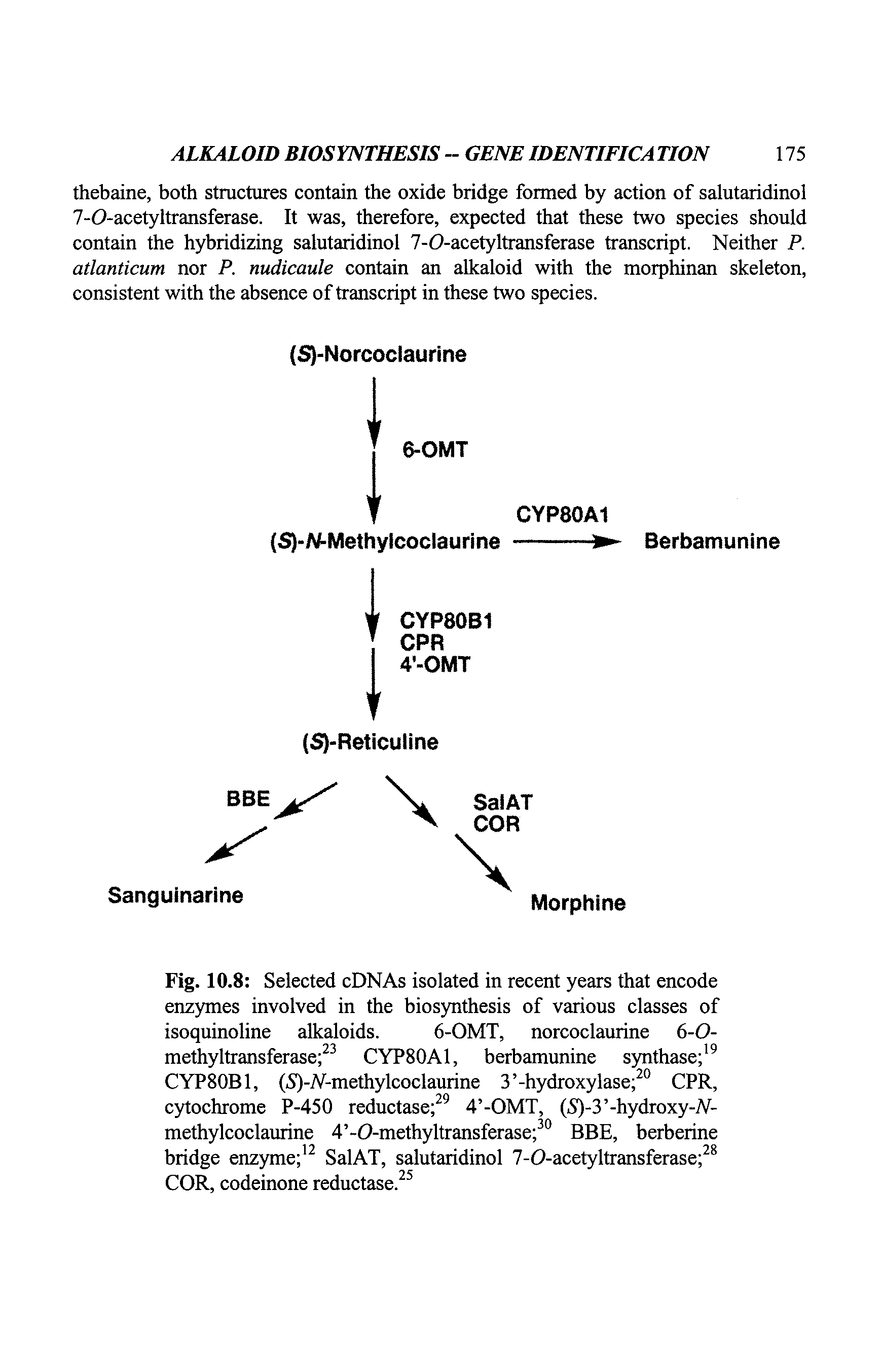 Fig. 10.8 Selected cDNAs isolated in recent years that encode enzymes involved in the biosynthesis of various classes of isoquinoline alkaloids. 6-OMT, norcoclaurine 6-0-methyltransferase 23 CYP80A1, berbamunine synthase 19 CYP80B1, (S)-A-methylcoclaurine 3 -hydroxylase 20 CPR, cytochrome P-450 reductase 29 4 -OMT, (5)-3 -hydroxy-A-methylcoclaurine 4 -0-methyltransferase 30 BBE, berberine bridge enzyme 12 SalAT, salutaridinol 7-O-acetyltransferase 28 COR, codeinone reductase.25...