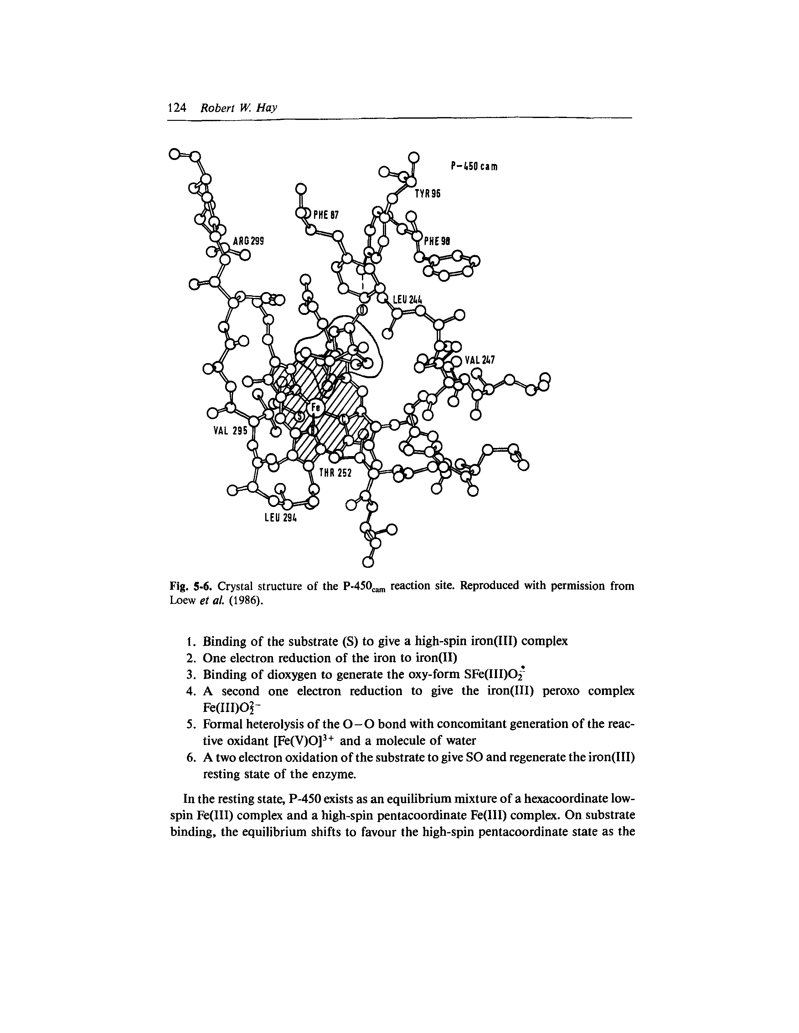 Fig. 5-6. Crystal structure of the P-450cam reaction site. Reproduced with permission from Loew et at. (1986).