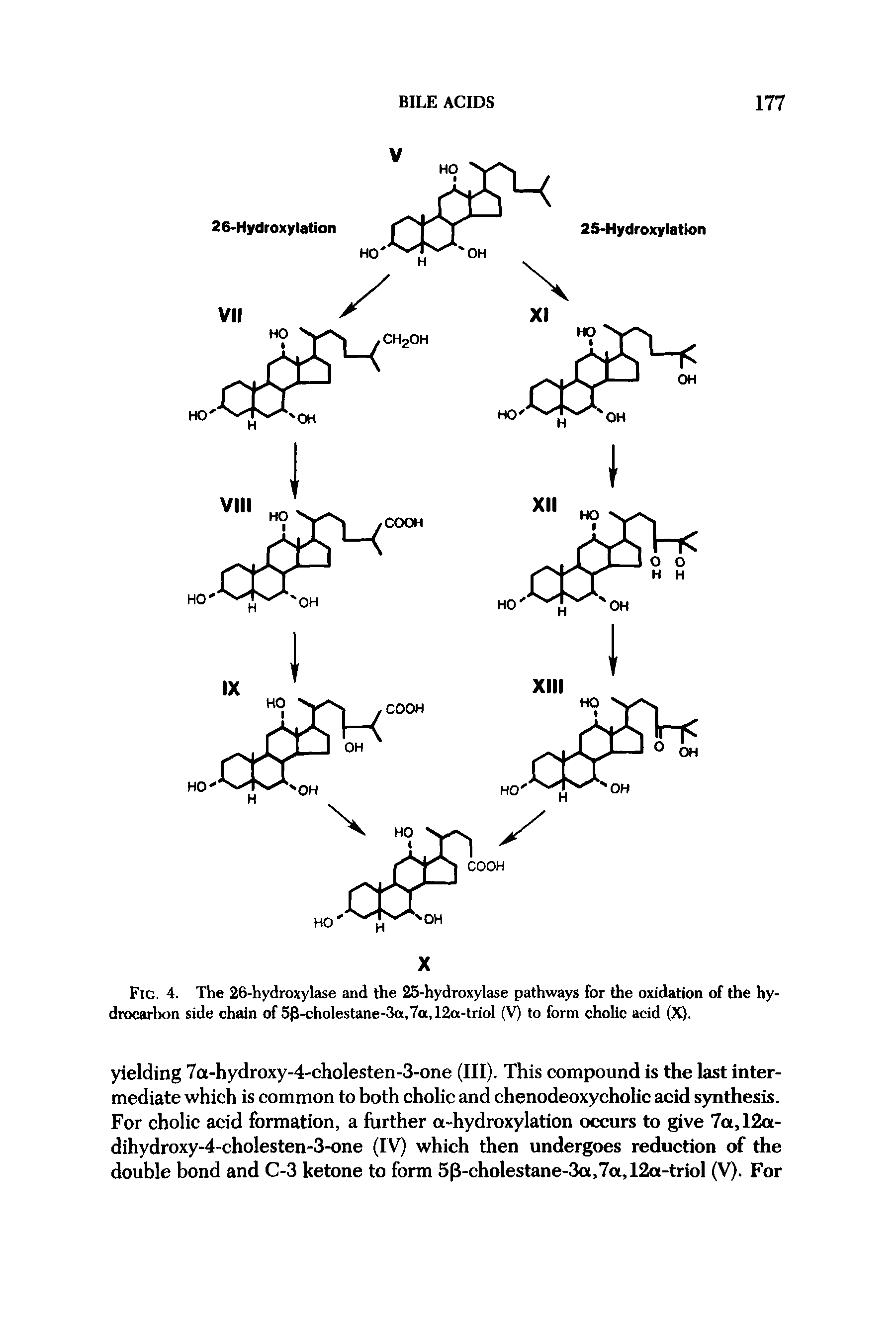 "Fig. 4. The 26-hydroxylase and the 25-hydroxylase pathways for the oxidation of the <a href=""/info/hydrocarbon_side_chain"">hydrocarbon side chain</a> of 5p-cholestane-3a,7a,12a-triol (V) to form cholic acid (X)."