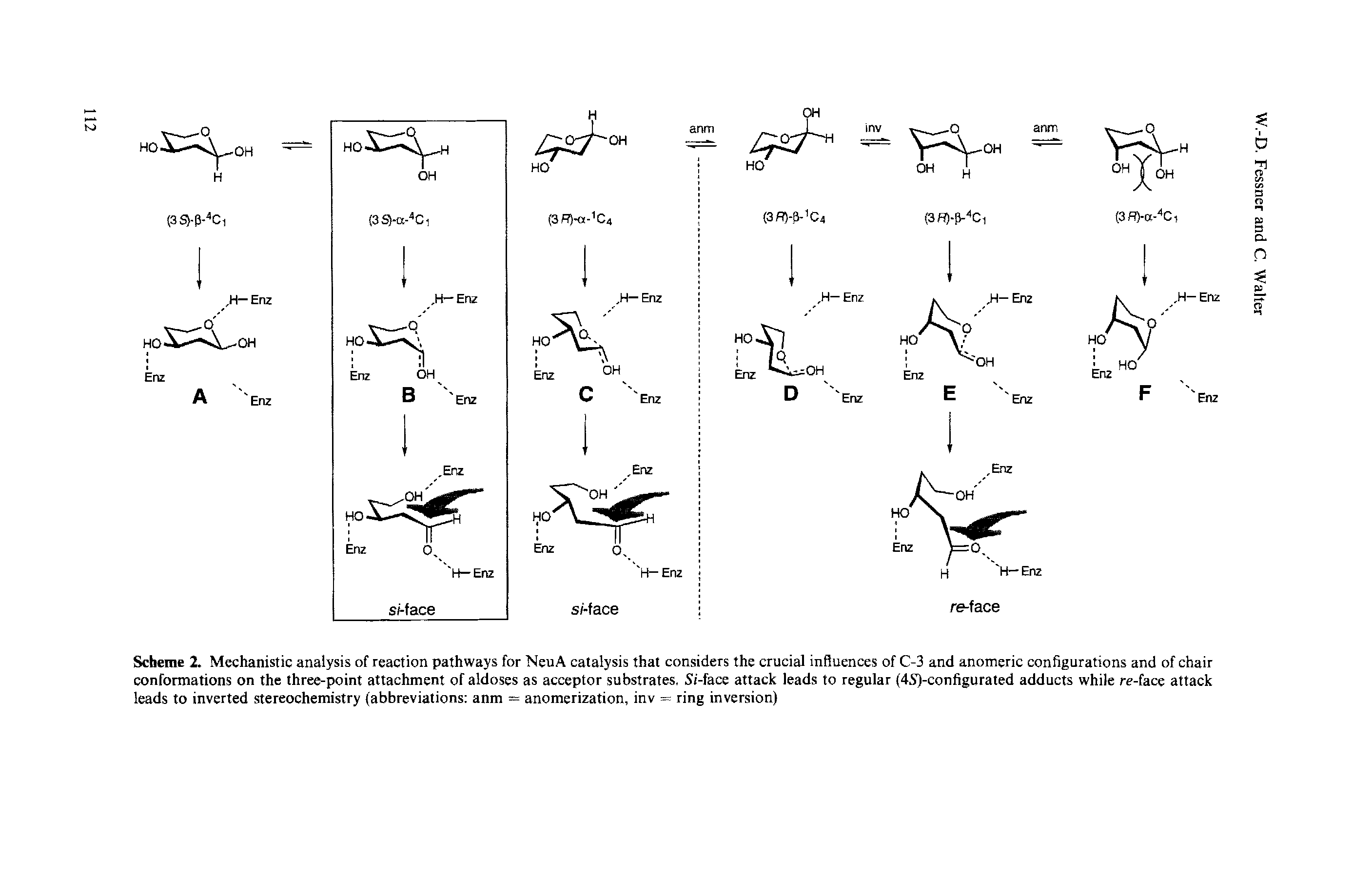 "Scheme 2. <a href=""/info/mechanistic_analysis"">Mechanistic analysis</a> of <a href=""/info/reaction_pathways"">reaction pathways</a> for NeuA catalysis that considers the crucial influences of C-3 and <a href=""/info/anomeric_configuration"">anomeric configurations</a> and of <a href=""/info/chair_conformation"">chair conformations</a> on the <a href=""/info/attachment_three_point"">three-point attachment</a> of aldoses as <a href=""/info/acceptor_substrate"">acceptor substrates</a>, Si-<a href=""/info/re_face_attack"">face attack</a> leads to regular (4S)-configurated adducts while re-<a href=""/info/re_face_attack"">face attack</a> leads to inverted stereochemistry (abbreviations anm = anomerization, inv = ring inversion)"