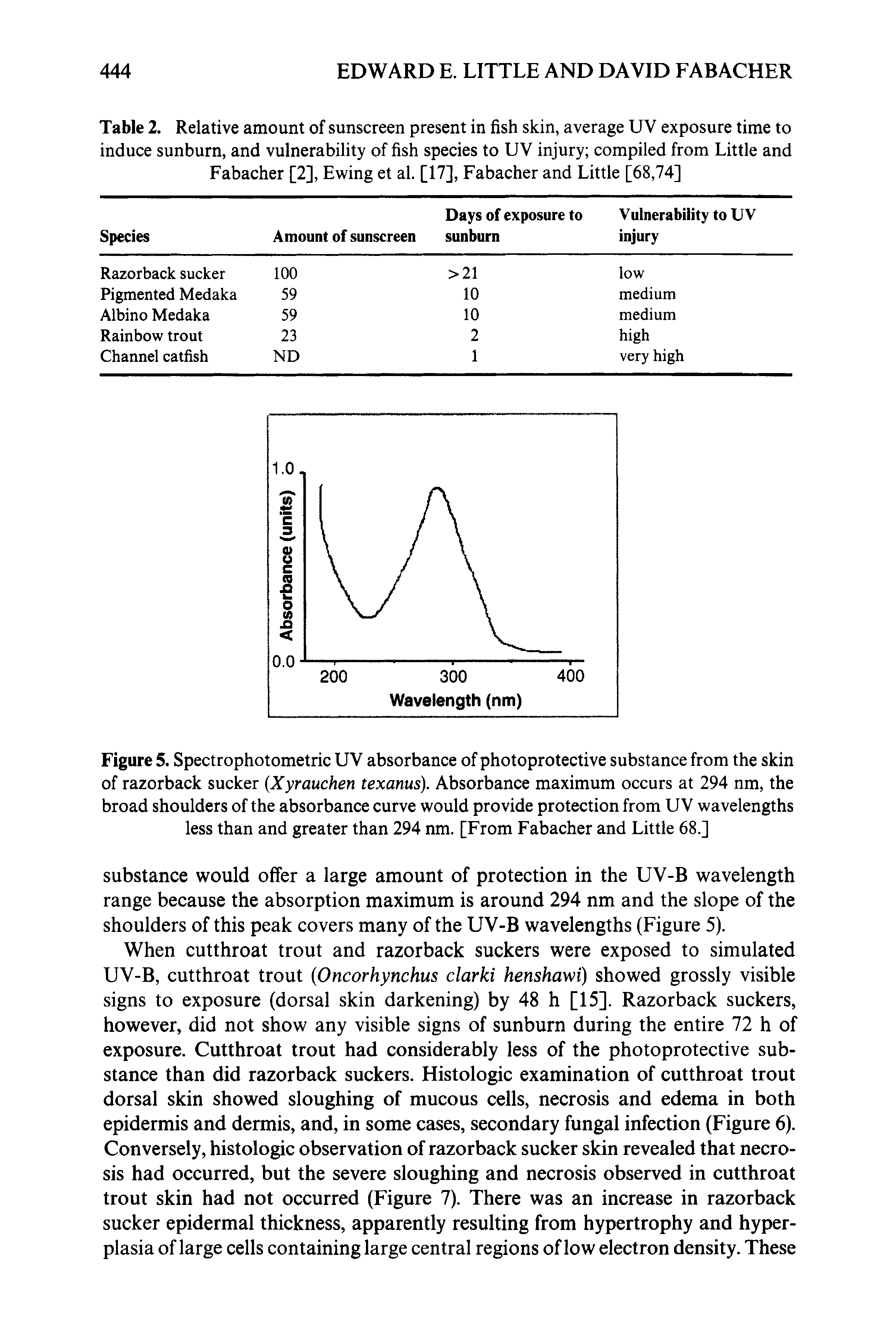 Figure 5. Spectrophotometric UV absorbance of photoprotective substance from the skin of razorback sucker Xyrauchen texanus). Absorbance maximum occurs at 294 nm, the broad shoulders of the absorbance curve would provide protection from UV wavelengths less than and greater than 294 nm. [From Fabacher and Little 68.]...